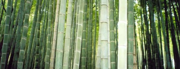 matelas naturels matelas bambou en vert et contre tous ensemble literie. Black Bedroom Furniture Sets. Home Design Ideas