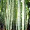 Matelas naturels : matelas bambou en vert et contre tous