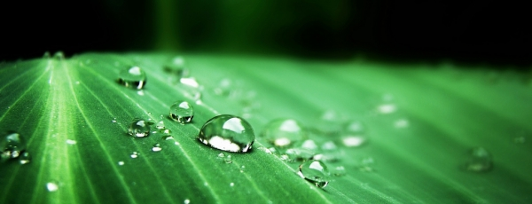 Matelas naturel en fibre de bambou : le garnissage écolo ?