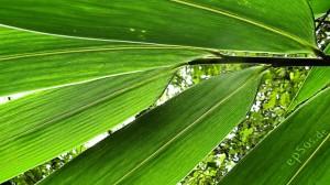 Fibre de bambou, pour un matelas qui respire